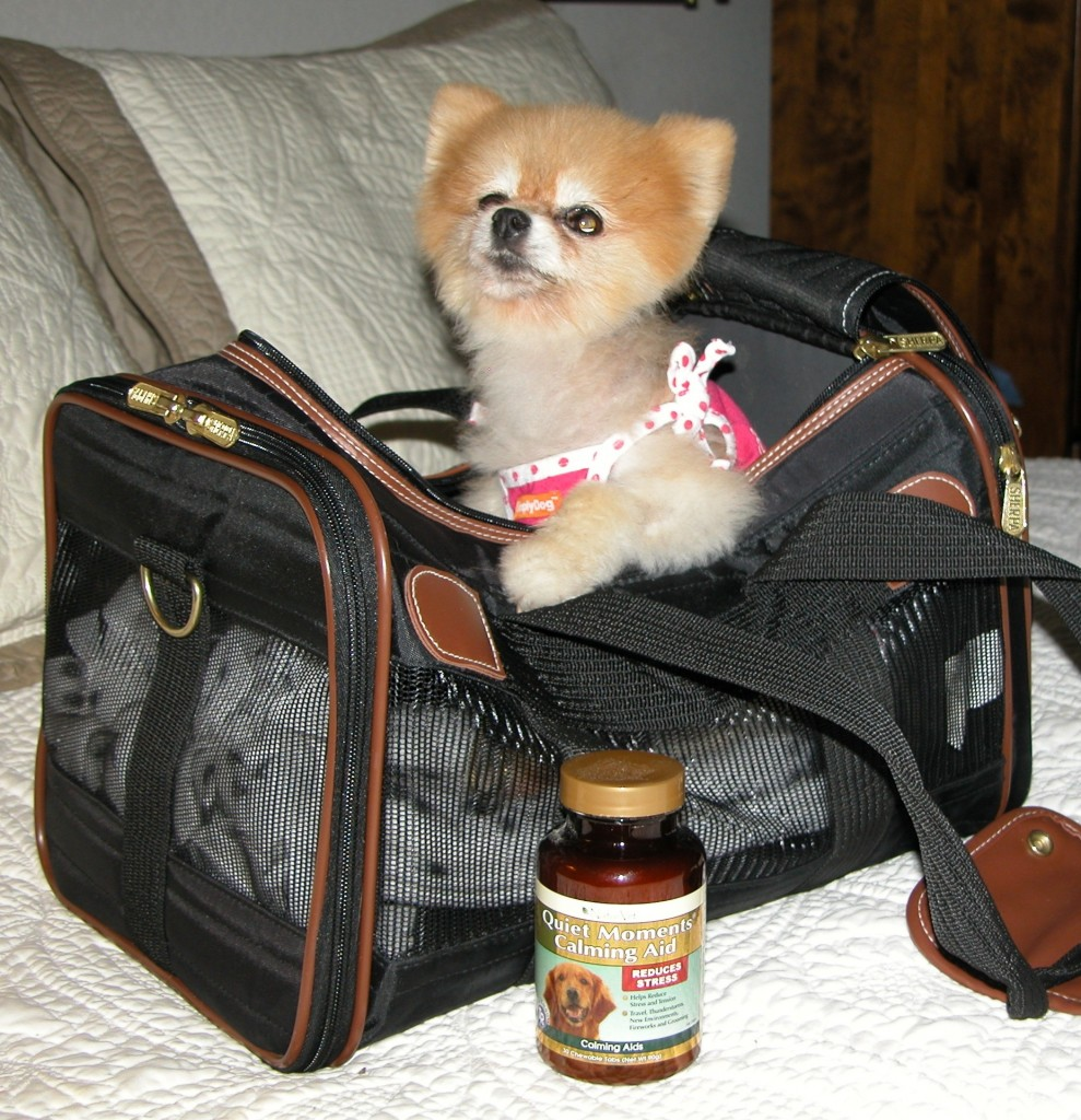 Bella travels in style