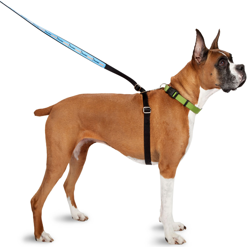 dog harness for walking how to put on