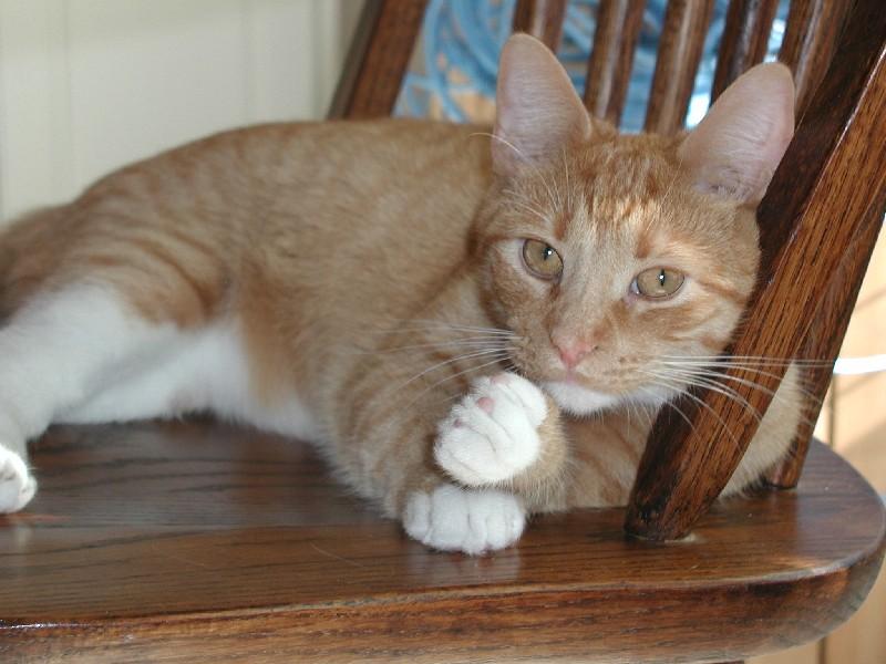 A bored cat may exhibit destructive behaviors