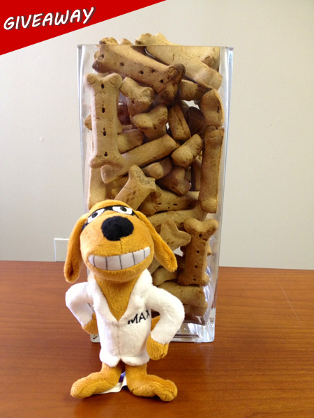 Guess the correct number of dog biscuits and you win!