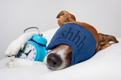 Sleeplessness in dogs may have physical or psychological causes