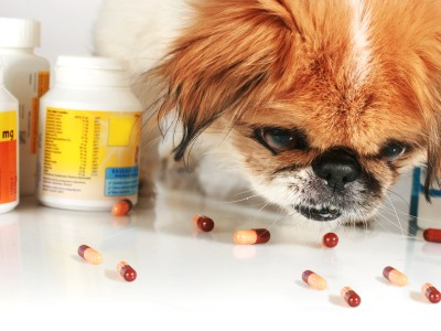 Pets metabolize medications differently than do humans