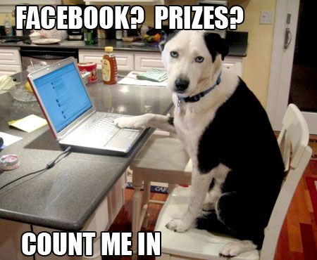Celebrate National Dog Week and win prizes on our Facebook page