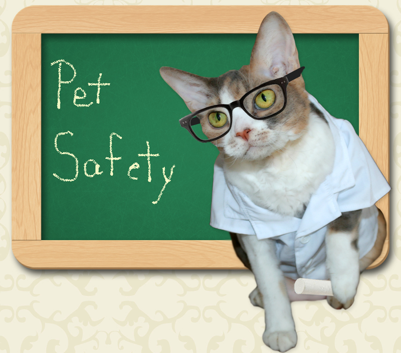 pet-safety-Daisy