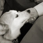 Therapy dogs do incredible work