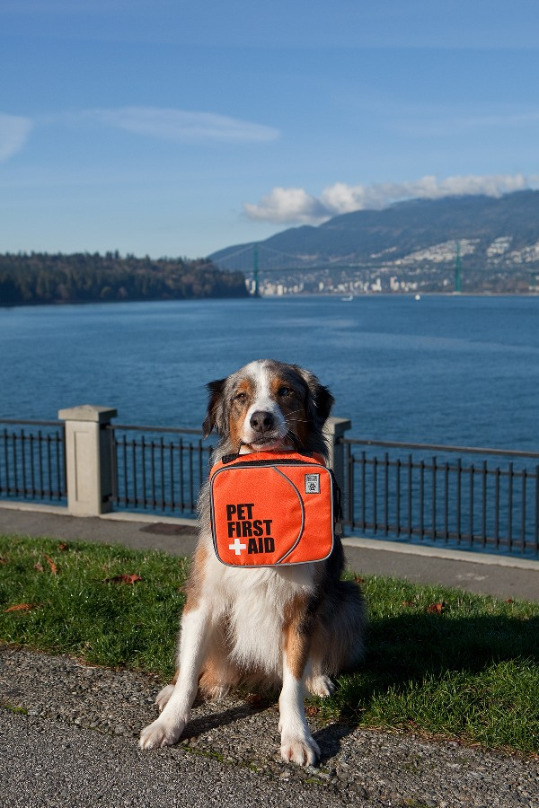Be prepared for any emergency with a pet first aid kit