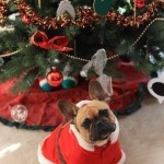 How to make the most of the holidays with your pet
