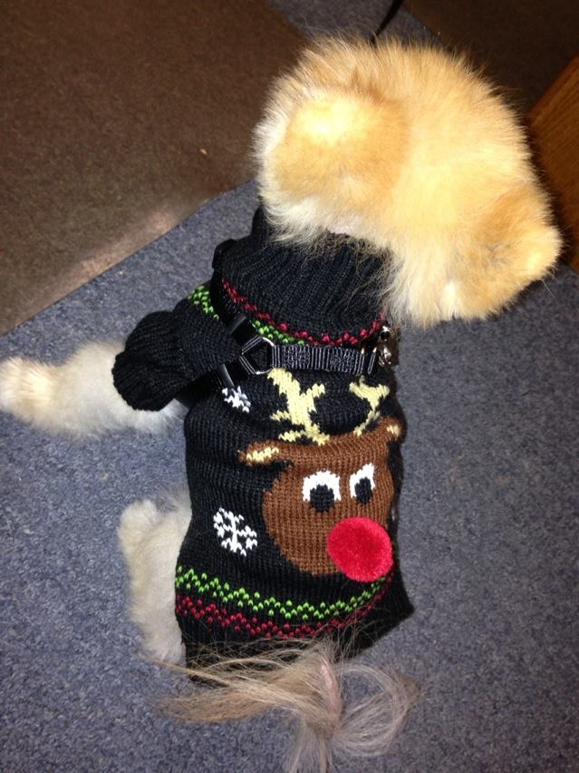 Reindeer Sweater 2013