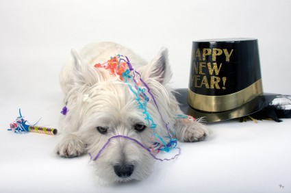 Ways to help your pet have a healthy New Year