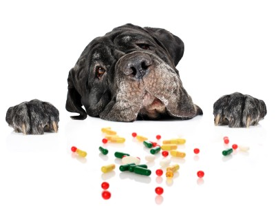 Common medications can be dangerous for pets
