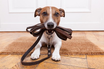 Learn how to choose the right leash