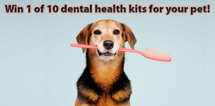 dental_health_sweepstakes