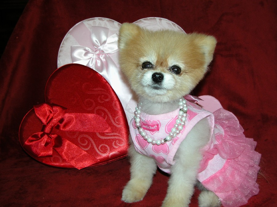 Bella has important tips for Valentine's Day safety