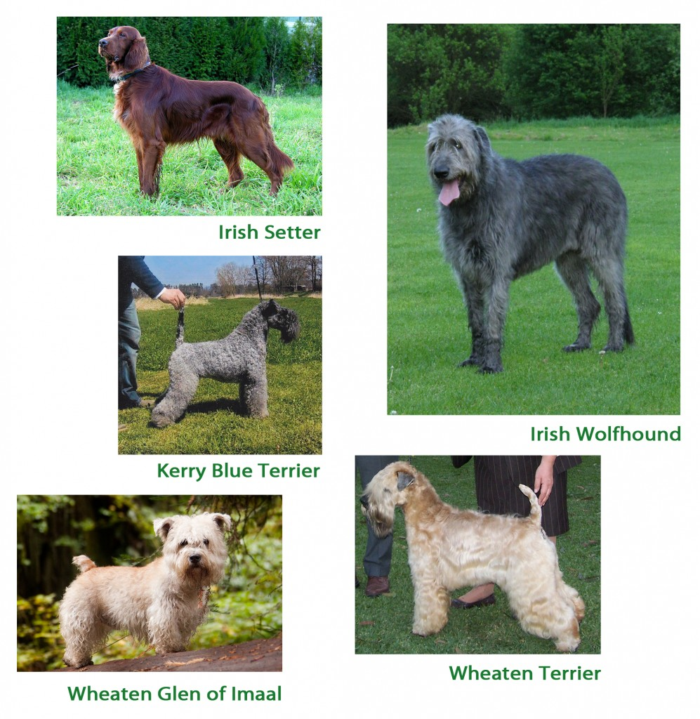 Cool Dog Breeds For Guys