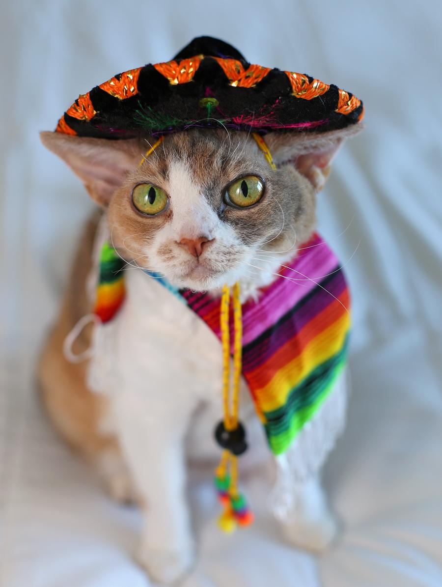 Daisy dons a sombrero to celebrate Cinco de Mayo