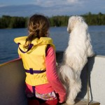 life-jackets-keep-pets-safe-on-water