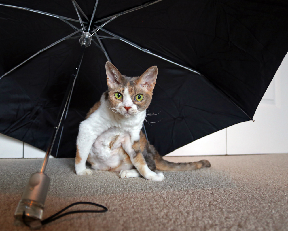 Opening an umbrella indoors is considered bad luck