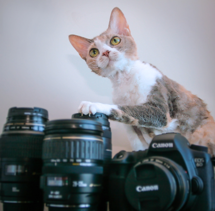 Daisy plays with a camera and lenses