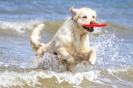 Summertime means water activities and fun for our pets