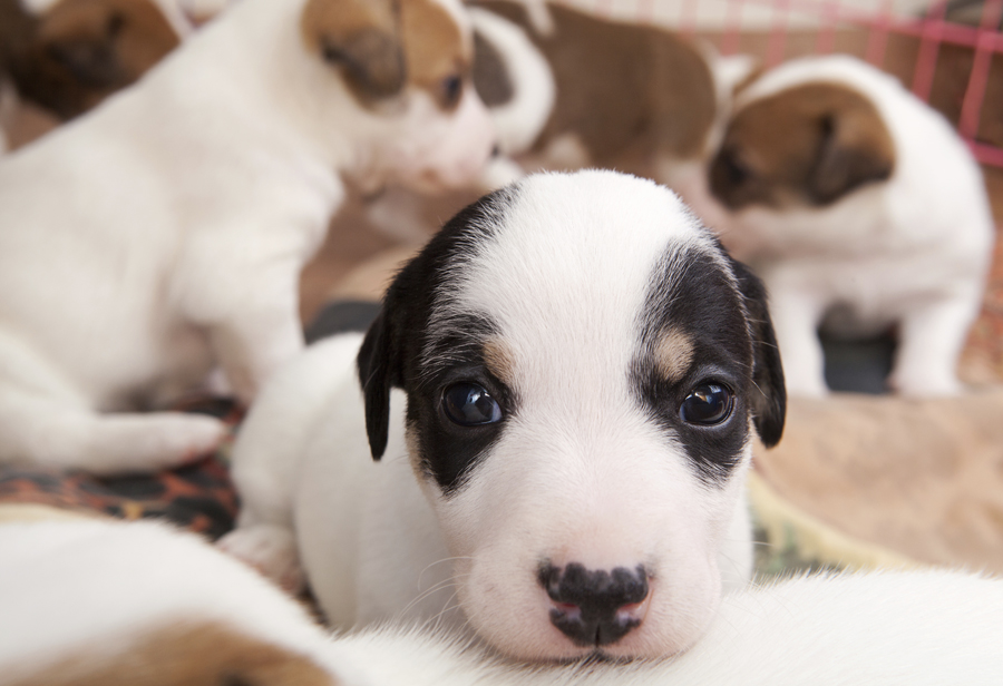 What your new puppy wants you to know