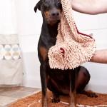 soggy-doggy-doormat-shammy
