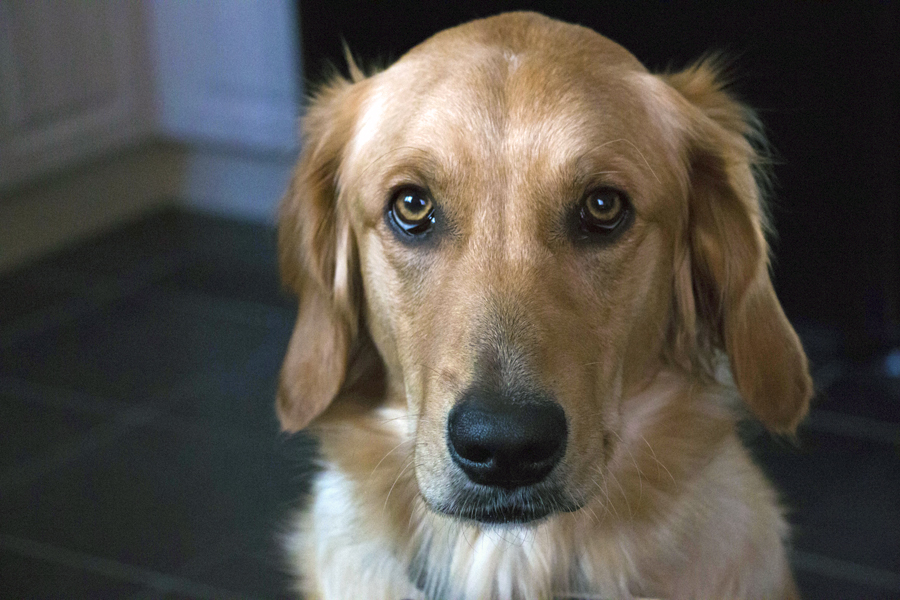 Dogs beg for treats that may not be good for them