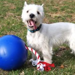 Enjoy more outdoor time this summer with the Tuggo Dog Toy