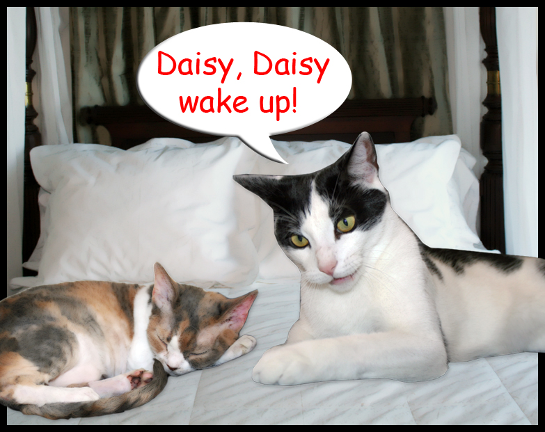 Daisy plans to sleep in on Labor Day