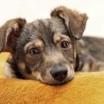 pet-therapeutics-for-pet-comfort