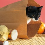 Whether it's a bag, box or tunnel, cats find fun anywhere they go