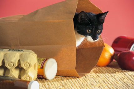 Ditch the paper bag as your cat's toy and upgrade to a Crinkle Cat Tunnel