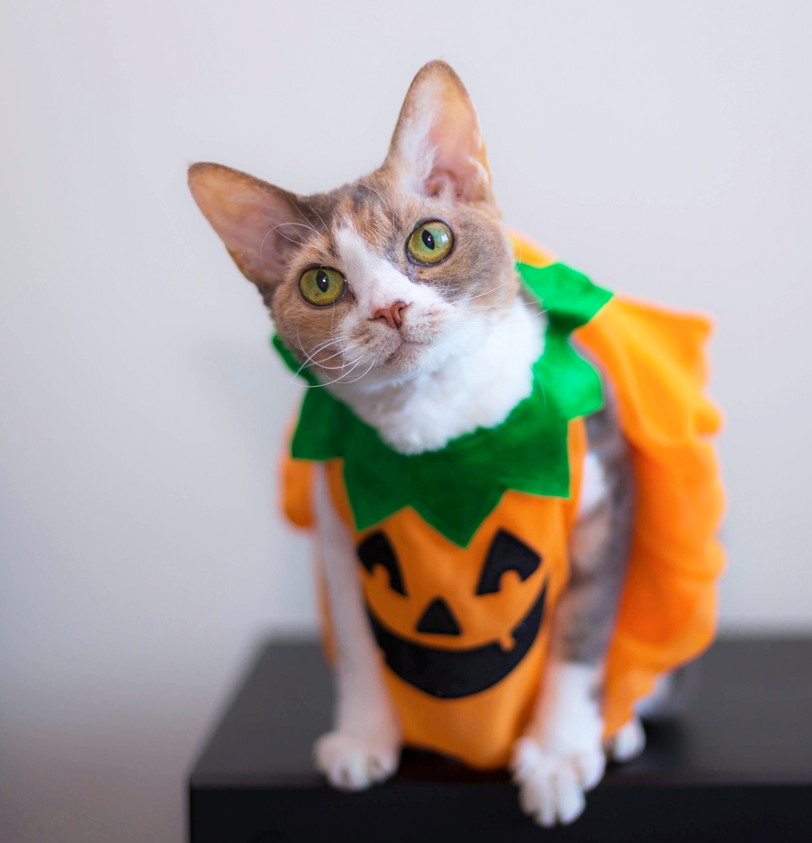 Daisy-costume-1