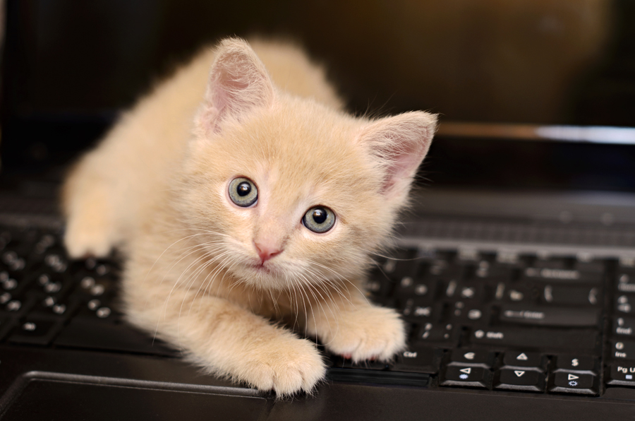 Cats love to play on the laptop!