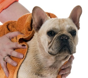 Your pet's skin and coat provide clues to overall health