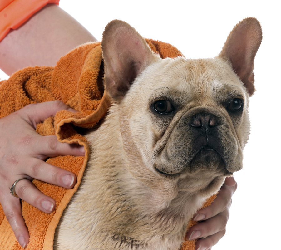 Fatty acid supplements can help your dog's skin and coat