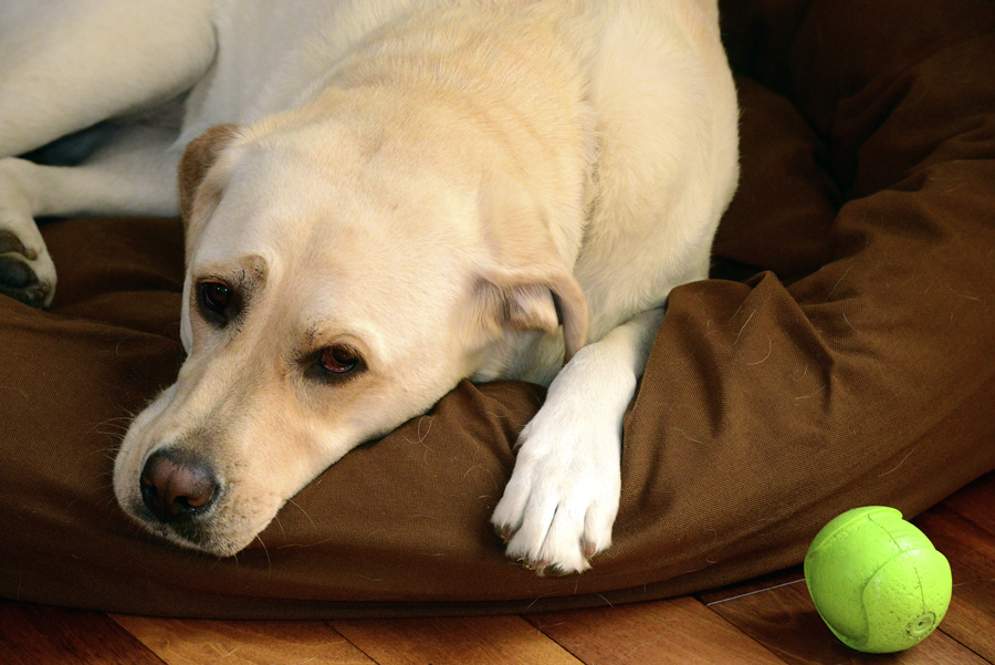 It's important to identify the cause of your dog's insomnia