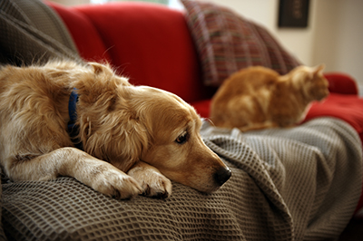 Kidney supplements for dogs and cats