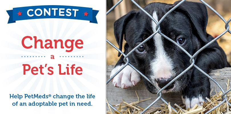 Enter the Change a Pet's Life Contest