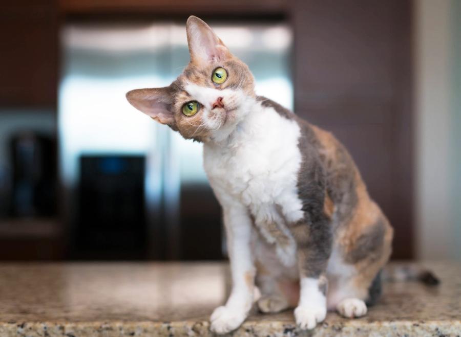 Daisy Cat Health1