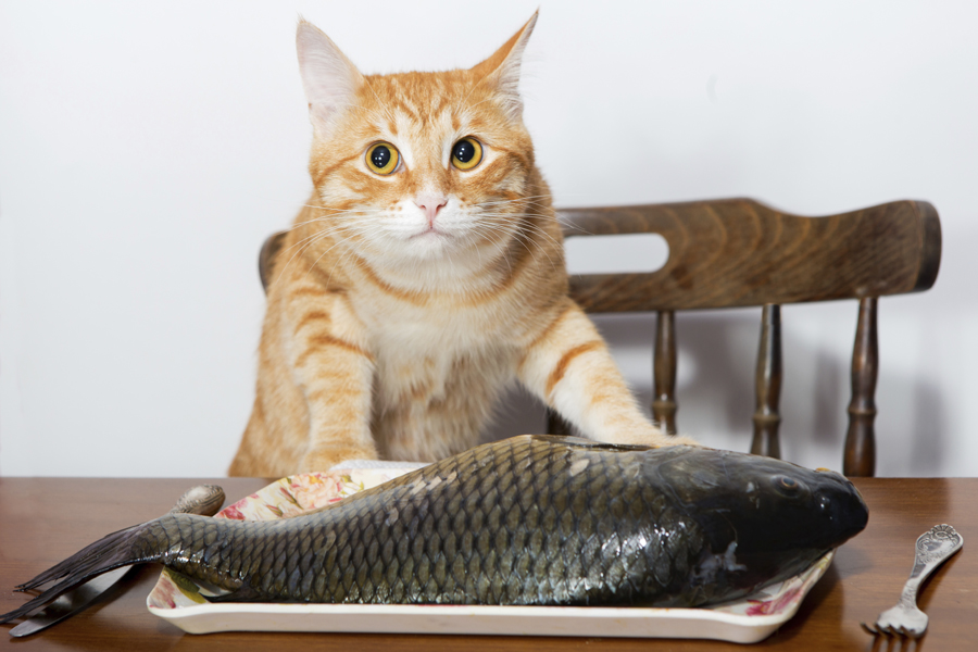 Fatty acids help keep your pet's coat shiny and healthy