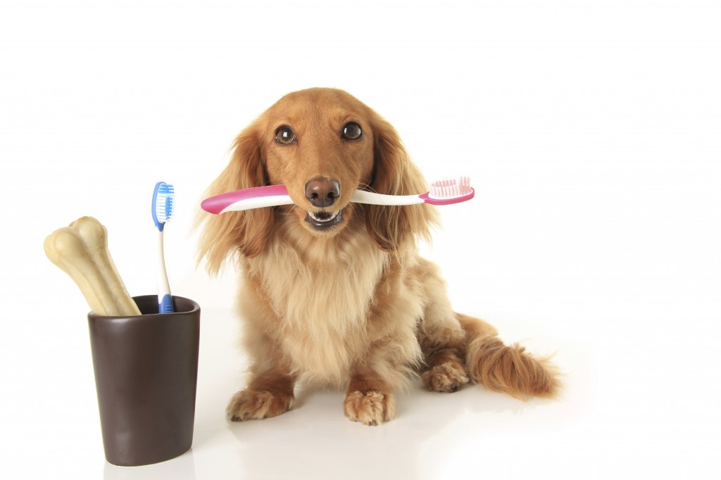 Brushing your pet's teeth can ward off dental disease!