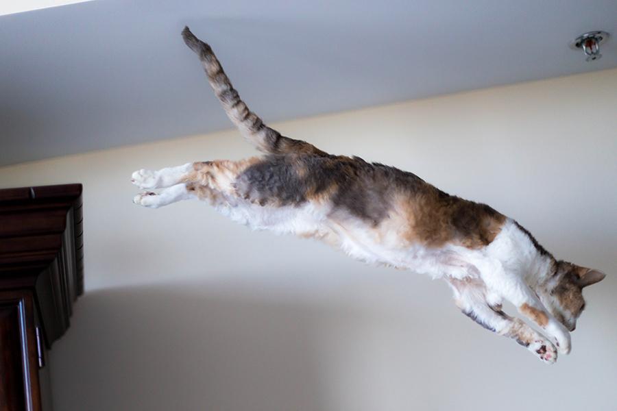 Daisy jumps1