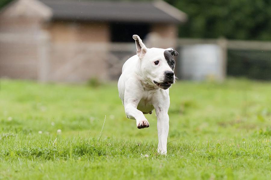 runaway-dog