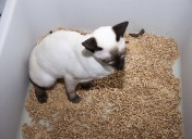 How do cats know how to use a litter box?