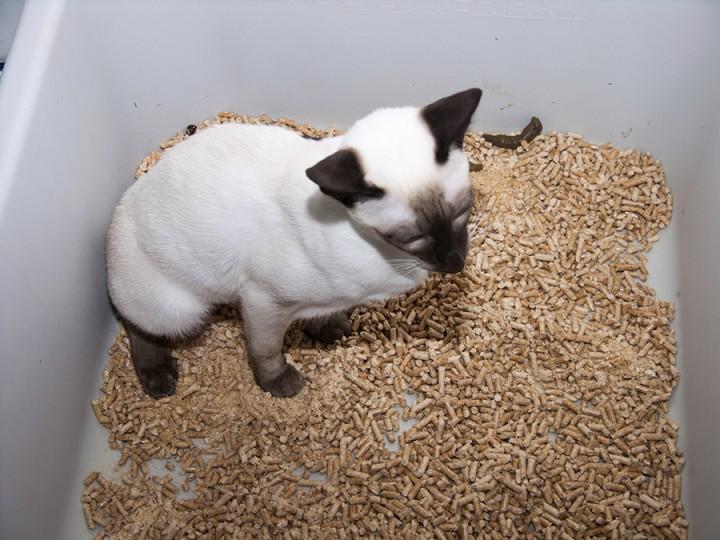machine gun cat gif
