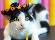What your cat really wants to do on Cinco de Mayo
