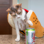Daisy does not recommend soda