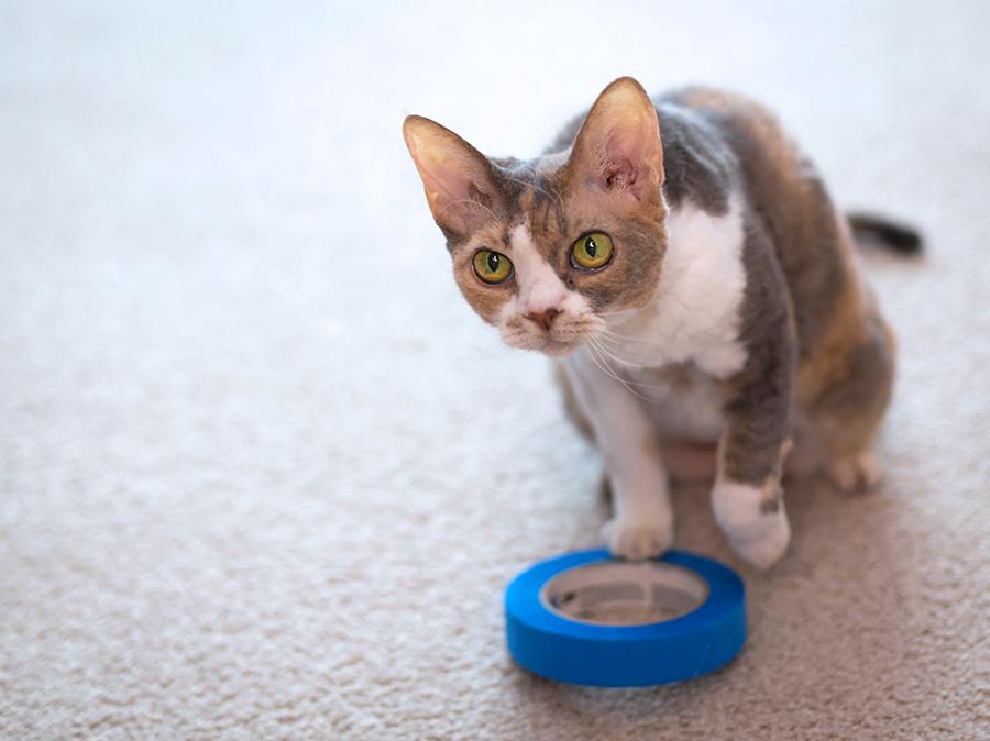 Daisy investigates cat circles