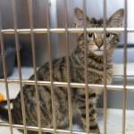This is a great time to consider adopting a cat or kitten
