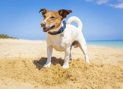 Preventing & Managing Heat Stroke in Pets